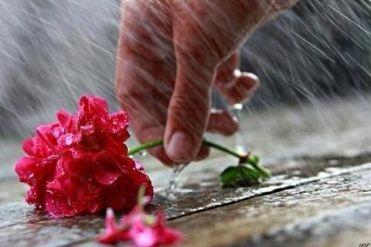 fiori-recisi-convegno-violenza-donne-disabili-torino-21-febbraio-2015
